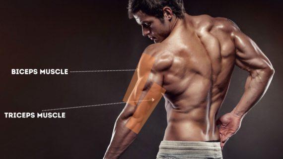 [Image: Mengenal-Otot-Lengan-Biceps-dan-Triceps-570x321.jpg]